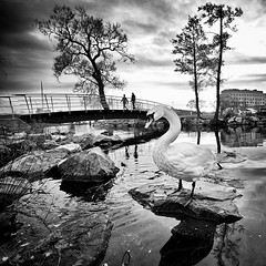 Alexander The Great.. (Peter Levi) Tags: city bridge people blackandwhite bw lake blancoynegro swan pond sweden stockholm blackwhitephotos bestcapturesaoi magicunicornverybest elitegalleryaoi mygearandme mygearandmepremium mygearandmebronze mygearandmesilver