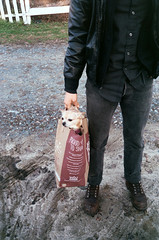 dog in a bag (Jacob Seaton) Tags: boy dog man leather fence bag boots wholefoods driveway gravel