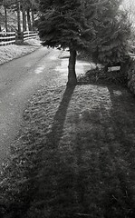Tree, FED 3 - Ilford HP5Plus (Sibokk) Tags: street uk blackandwhite bw white black film 35mm mono scotland aberdeenshire 35mmfilm filmcamera ilford insch fed3 hp5plus russiancamera filmphotography id11 auchleven ilfordid11 filmdevelopment 35mmfilmcamera believeinfilm