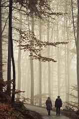 Walk (koeb) Tags: trees fog forest nebel walk wald spaziergang duensberg