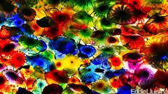 Fiori di Como [Explored 01/05/12] (Eddie 11uisma) Tags: las vegas como chihuly di bellagio fiori supershot