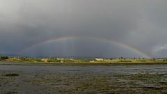 Putemun (andysj531) Tags: chile rainbow tidal mudflat chiloe shorebird putemun