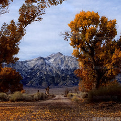 Mount Williamson from Manzanar (alpenbild.de) Tags: california road ca street autumn usa mountain tree fall nature berg landscape strasse herbst natur sierranevada lonepine landschaft baum autumnal highsierra kalifornien manzanar owensvalley herbstlaub