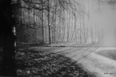 Trees (Ken-Zan) Tags: trees bw shadows bn trd repro stammar svartvitt kenzan kartpostal soldis