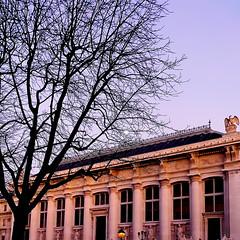 Palais de justice (Tribunal) (Giulia_) Tags: paris france justice place hiver cit palais tribunal arbre dauphine faade jan12 colonne institution le aigle svre