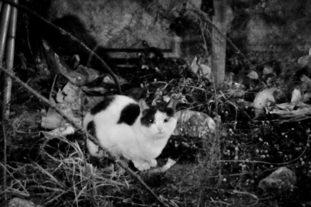 Today's Cat@2012-01-18