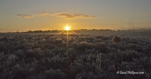 Jan New Forest Sunrise