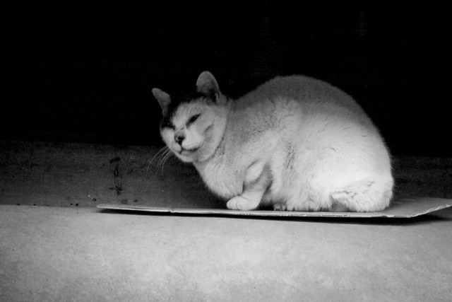 Today's Cat@2012-01-21