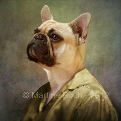 the suspicious lady (Martine Roch) Tags: portrait dog pet animal lady puppy square funny expression antique surreal frenchbulldog surrealist suspicious surraliste bouledoguefranais bouledogue martineroch thecharacters flypapertextures lescaractres