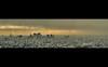 Tokyo Shinjuku Panorama (Le Velo Indigo) Tags: camera city travel sunset panorama colour building rain japan photography tokyo cool fantastic shinjuku cityscape 26 25 ikebukuro concept 12 conceptual fotográfica photographies explorefrontpage damniwishidtakenthat oloneo nikond3100 leveloindigo highdynamictonemapping 600mmn sunshinecity60thfloor photoshopelements10etnonelementtermoncherwatson0 scifipanorama