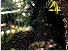 Web (Dregster) Tags: detail nature spider web natureza aranha teia gettyimagesiberiaq3 gettyimagesiberiaq12012