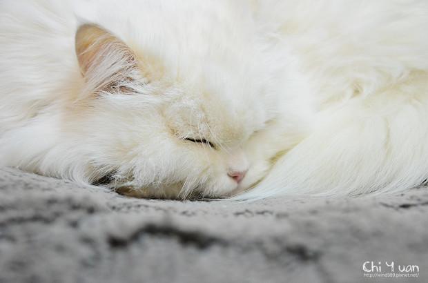 [好物]溫馨立體格棉踏墊。貓咪叮叮的專屬睡墊(特力屋)