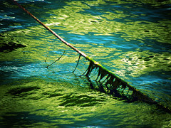 (gulgulas) Tags: green wire ripples algaes