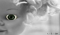 (COLOLIN by dani morillo) Tags: barcelona china california birthday christmas city family flowers blue autumn friends england blackandwhite bw food dog baby chicago canada black france flower color berlin green bird art fall film beach halloween church girl car fashion birds animals bike festival architecture clouds cat canon germany garden de geotagged fun graffiti hawaii dance football concert asia europe day florida band australia