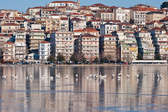 Kastoria frozen (Nick-K (Nikos Koutoulas)) Tags: lake ice birds gulls ducks kastoria