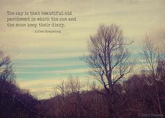 Parchment Sky (Sherri Brannon) Tags: trees winter sky clouds bare streaks iphone