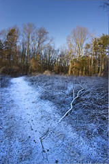 Following Foxes (Volpe della Notte) Tags: snow sunrise woods tracks footprints fox