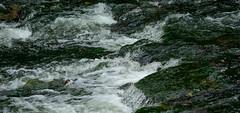Valgejgi (hommik) Tags: nature river estonia welcometoestonia