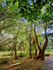 In the forest (elphweb) Tags: trees tree forest coast australia coastal hdr