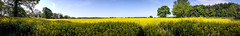 20160515_092928 (ABJ73) Tags: uk blue sky panorama field yellow samsung galaxy edge warwickshire android s6