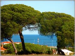 Mazagn (Huelva) (Spain) (sky_hlv) Tags: summer espaa praia beach andaluca spain europa europe huelva playa resort verano atlanticocean pinares costadelaluz moguer palosdelafrontera mazagn oceanoatlntico
