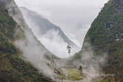 K7838.0312.Pai Lng.i ng Thnh.Mo Vc.H Giang. (hoanglongphoto) Tags: morning mist mountain nature canon landscape asian asia outdoor vietnam defile flank mountainlandscape rockmountain northvietnam phongcnh ni thinnhin vietnamnature northeastvietnam hgiang mountainouslandscape vietnamlandscape ngoitri ngbc phongcnhvitnam canoneos1dsmarkiii movc chu ngnam snni sngm buisng ni canonef70200mmf28lisiiusmlens hmni pailng thinnhinvitnam vietnammountainouslandscape phongcnhvngni phongcnhhgiang phongcnhmovc ingthnh nihgiang