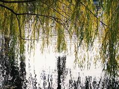 2015-11-10 07.15.54 1 (anastasiya_klenyaeva) Tags: trees sky nature russia autmn     saratov vsco vscocam vscorussia vscosaratov