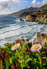 Living on the Edge, Big Sur (Rod Heywood) Tags: bigsur flowers wildflowers spring beach coast waves pacificocean pacific montereycounty california iceplant seasidedaisies flowerbed landscape erigeron erigeronglaucus daisies cliffs bluff composition scenic livingontheedge