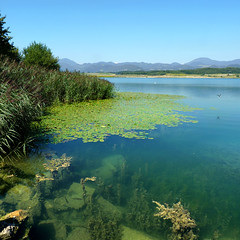 Velenje lake - Jewels of nature (Bn) Tags: blue vacation sky lake holiday plant green nature water swimming swim children geot