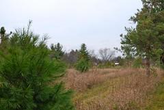 Pioneer Tree Farm
