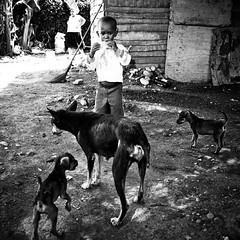 Puppies need a mother (Giovanni Savino Photography) Tags: square squareformat normal  iphoneography instagramapp uploaded:by=instagram giovannisavino