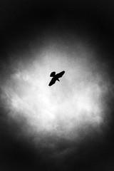 Osaka  _KI_0031 (aki*3) Tags: bird holga osaka