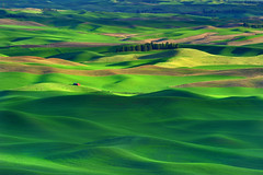 Sun and Meadow (Ireena Eleonora Worthy) Tags: light sunset shadow green washington spring fields farms redbarn goldenhour palouse easternwashington steptoebutte northernstraitsphotography