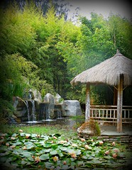 ~~BaMBoO GiaNT NurSeRy #6~~ (TravelsThruTheUniverse) Tags: waterlilies ponds tropicalplants tropicalflowers exoticgardens wow1 waterfeatures zengardens exoticflowers asiangardens summergardens tropicalgardens tropicalfoliage californiagardens waterinthegarden subtropicalgardens tropicallandscapes mygearandme subtropicallandscapes