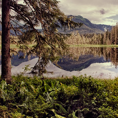 Verdant Mirror (Christopher DiNottia) Tags: park trees light wild sky cliff plants mountain lake color art nature ecology colors leaves rock stone alaska forest canon woodland outside outdoors interesting intense woods scenery mood peace view good earth timber country hill grow environmental peak scene boulder brush ridge mount explore growth valley surprise summit vista environment remote tall growing wilderness quite range powerful eco crevasse frontier precipice exciting backwoods amaze crag godly tallness
