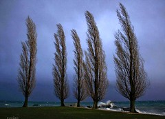Plongeoir et peupliers (L. A. Garchi) Tags: lake storm tree lac wave stormy lg vague lman plage joachim temporal sustainable wellen onda tempte sviss sturm durable lutry plongeoir romandie peupliers contactme svjc uswisi mg9331 ucanbuymypicwithbitcoin  madeindemocracy