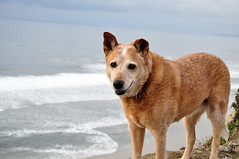 Panga -- No Fear of Heights (Randy, Dingo & Panga) Tags: ocean santa moon bay pacific pch cruz half sheila panga