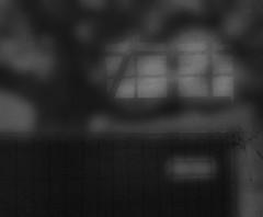 Schlo Schnbrunn - Shrouded - Potemkin Facade (hedbavny) Tags: wien light shadow tree window ast branch sightseeing scaffold shroud renovation verpackung schatten baum shrouded packed schleier restauration sehenswrdigkeit gerst restaurierung schnbrunnpalace eingepackt sterreichaustria verschleiert maskiert potemkinschesdorf eingerstet schlosschnbrunn potemkinfacade
