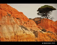 Algarve - Kste der Sehnsucht (H. Eisenreich Foto) Tags: red cliff tree rot portugal pine de landscape faro prime coast photo ic agua foto fotografie hans award olhos heike landschaft baum organe steilkste reise kste sehnsucht 2011 klippe reisefotografie pinie landschaftsfotografie schmidmhlen flickraward eisenreich reisefoto eijomian landschftsfoto