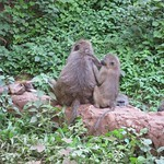 "Monkeys <a style=""margin-left:10px; font-size:0.8em;"" href=""http://www.flickr.com/photos/14315427@N00/6591820243/"" target=""_blank"">@flickr</a>"