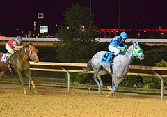 2011-12-23 (149) r3 Luis A. Batista on #9 Flying Punch (JLeeFleenor) Tags: horses caballo cheval photography grey photos uma racing cal jockeys jockey jinete cavallo cavalo pferd equestrian kuda alogo equine hest thoroughbreds soos hevonen cuddy paard cavall kon koin  jokey charlestownraces fantino hst ceffyl  jquei  ko faras hestur  perd ngi  konj    capall beygir yarraman dokej rennreiter  pfeerd   okej kilparatsastaja jocheu     luisabatista