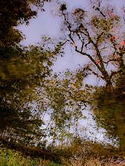 Reflection - LR3-311180-web (David Norfolk) Tags: winter bath olympus newyearseve pancake botanicalgardens ep3 17mm