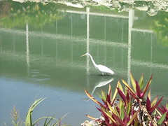 "Wading Bird at Sand Pointe Lagoon • <a style=""font-size:0.8em;"" href=""http://www.flickr.com/photos/43501506@N07/6613988527/"" target=""_blank"">View on Flickr</a>"
