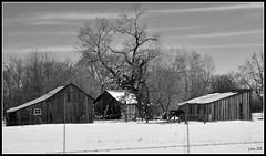 Snowy Sheds (pam's pics-) Tags: winter snow barn rural colorado december farm shed boulder co christmaseve 2011 bouldercounty pammorris pamspics nikond5000