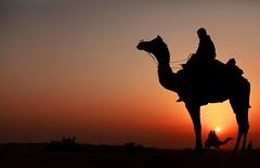 india (peo pea) Tags: sunset india tramonto dune tar rajasthan deserto cammello rajsthan jasalmer
