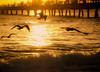 birds sunrise (Lenox Images) Tags: ocean morning beach water sunrise niceshot florida lauderdale ft doubleniceshot mygearandme mygearandmepremium flickrstruereflection1 flickrstruereflection2
