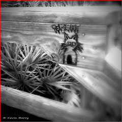 The Return of Tomcat! (Kevin B Photo) Tags: park wood morning winter blackandwhite bw plants usa cloud brown plant blur beach nature beautiful beauty closeup america outdoors photography one coast day alone exterior unitedstates graphic artistic florida cloudy south calm southern coastal national manmade boardwalk daytime fl southeast wintertime canaveral iphone constructed serenitynow kevinbarry canaveralnationalseashore iphone4 wowiekazowie 100ypl tomcatii