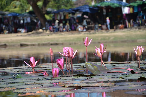 Water  lilllies ©  Still ePsiLoN
