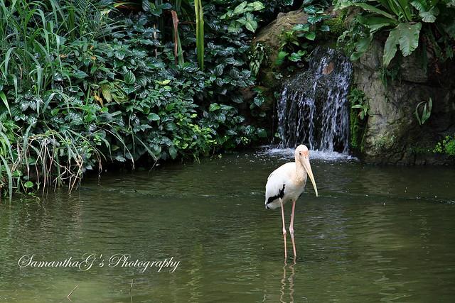 Pelican Cove
