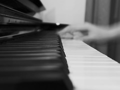 215/365 (and the bird took flight...) Tags: blackandwhite bw music blur me contrast speed photoshop keys blackwhite focus key long exposure day hand bokeh curtain year piano moi musical shutter 365 manual 215 yearly project365 365project 215365